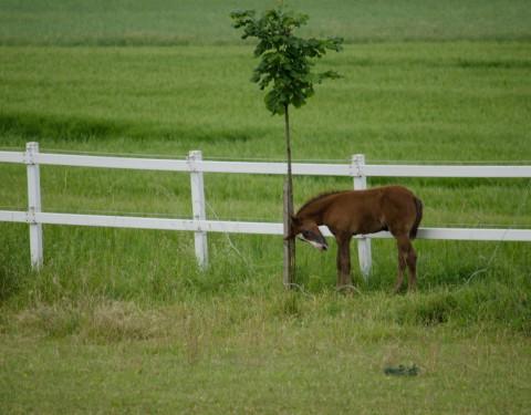 Pferdeleben
